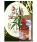 Fragrifert Parfumeur Balsemien