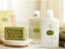 Olive Leaf Thymes for women and men Pictures
