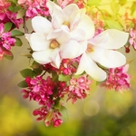 Perfumed Horoscope March 30 – April 5