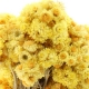 Immortelle  Ageless flowers