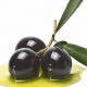 Olive Oil – The Liquid Gold