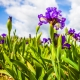 Perfumed Horoscope: April 22 - 28