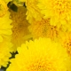 A Cascade of Yellow Florals: Translating the Color Signal into Olfactory Constituents