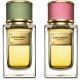 Velvet Rose and Velvet Bergamot by Dolce & Gabbana