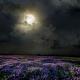 Perfumed Horoscope: October 20 - October 26