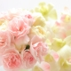 Scented Snippets New Fragrance Review: EnVoyage Perfumes Fiore di Bellagio / Divine Excess