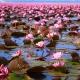 Perfumed Horoscope February 23 - March 1