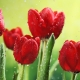 Perfumed Horoscope March 9 - March 15