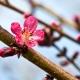Perfumed Horoscope April 13 - April 19