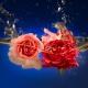 Perfumed Horoscope July 13 - July 19