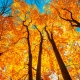 Perfumed Horoscope November 2 - November 8
