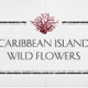 Crabtree & Evelyn Caribbean Island Wild Flowers