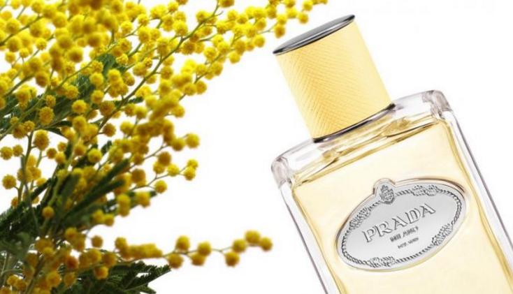 ~ Nouveaux Mimosa Parfums Prada De NouveautéInfusion rxWBedCQo