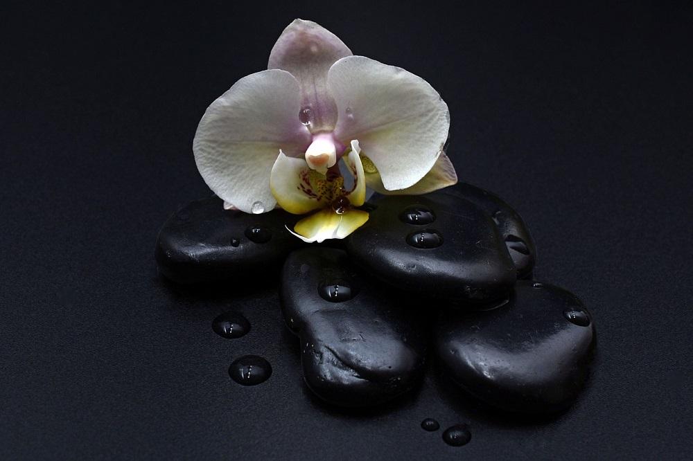Открытка черная орхидея