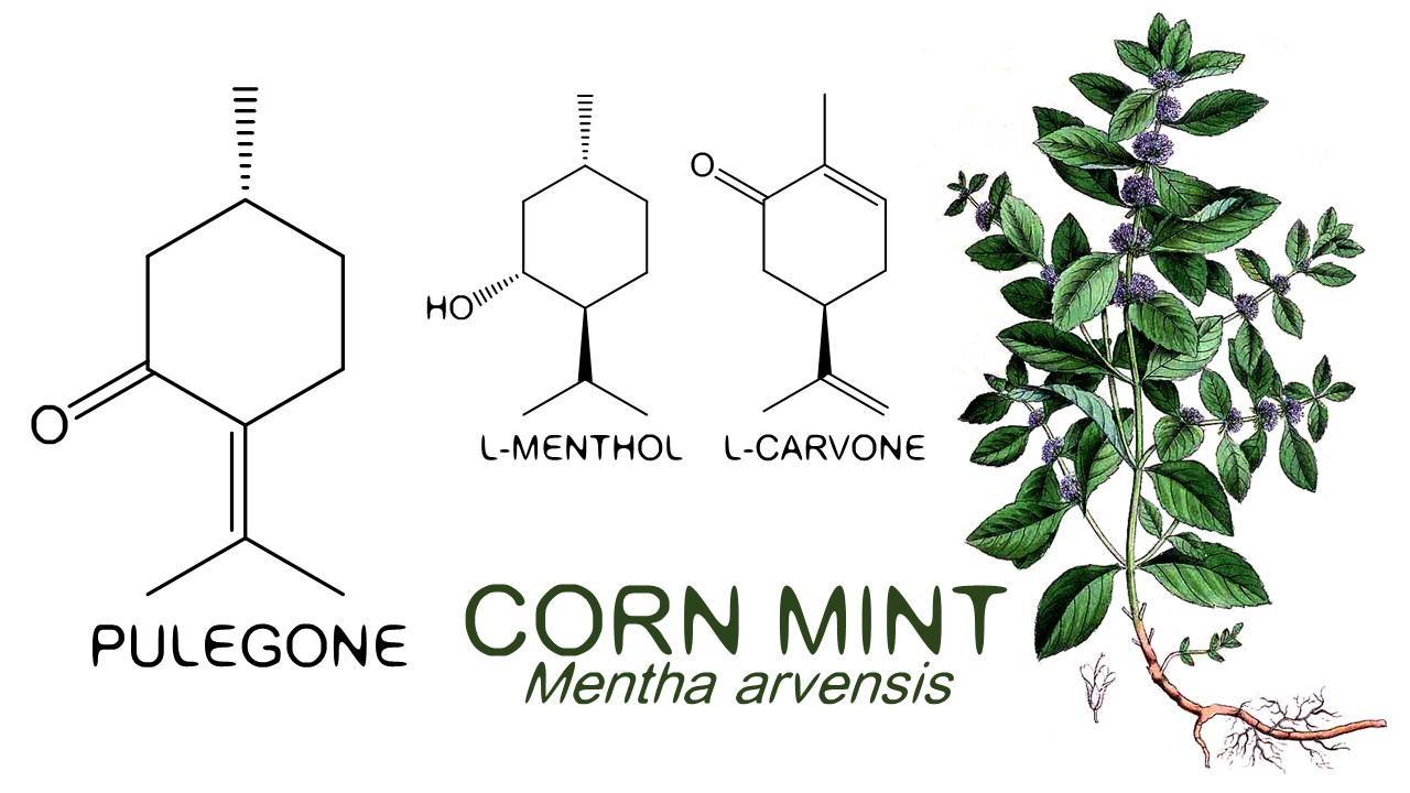 Mint Condition The Growing Popularity Of Mint In Fragrance
