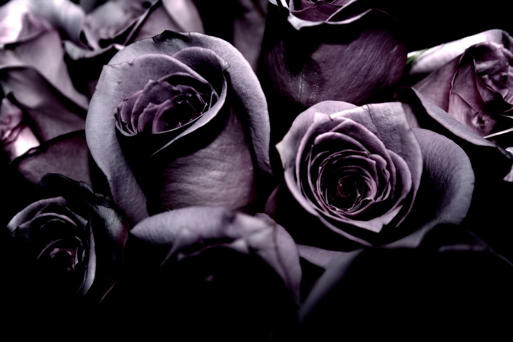 Цветные фотографии с белыми и черными розами
