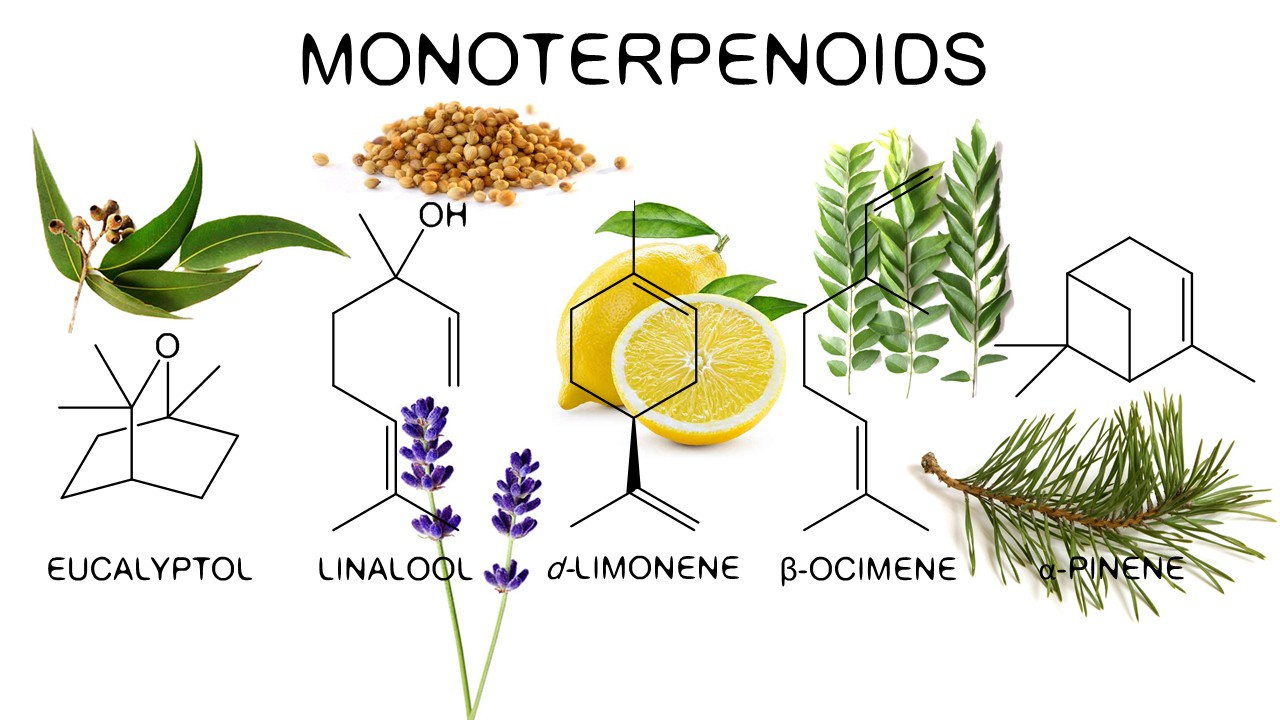 Monoterpinoids in tulips