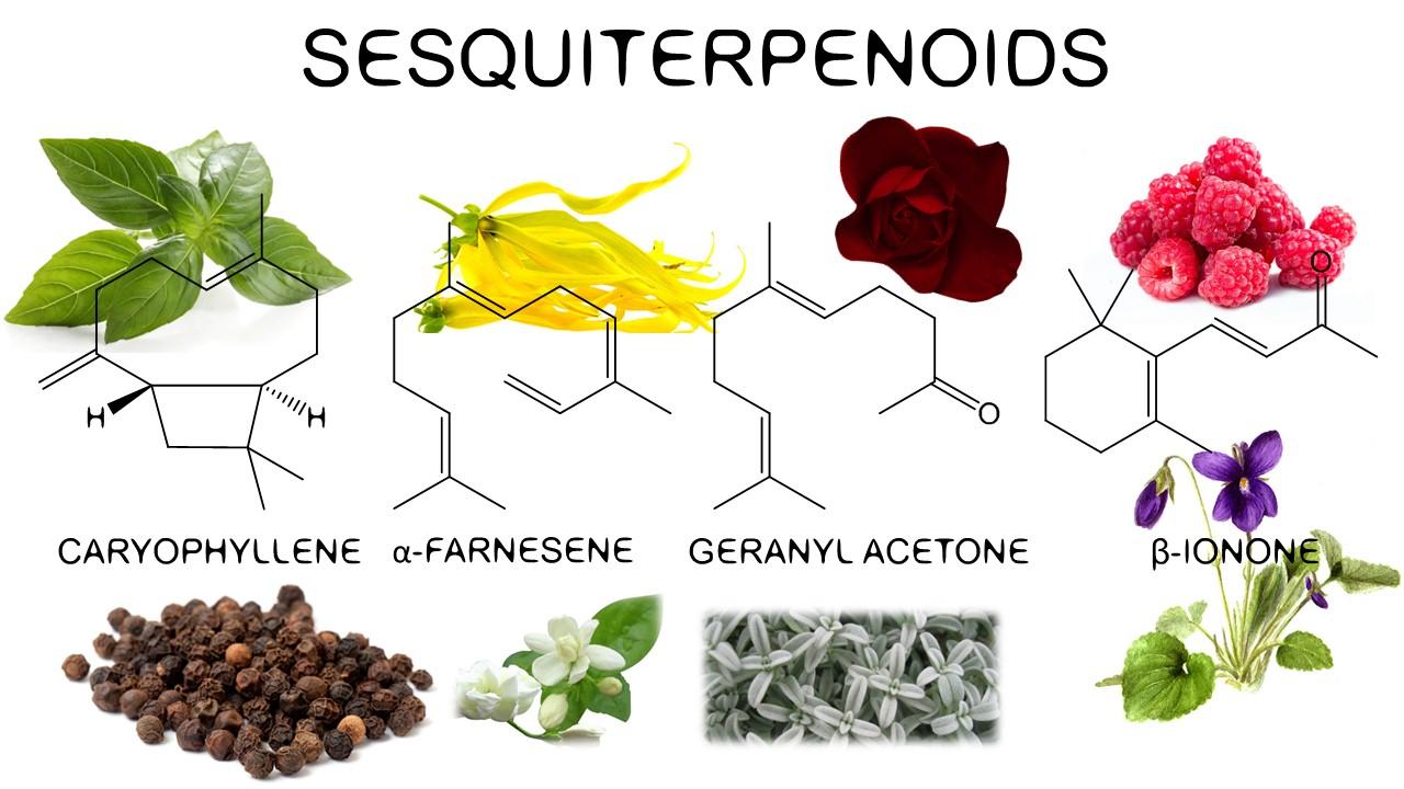 Sesquiterpenoids in tulpis