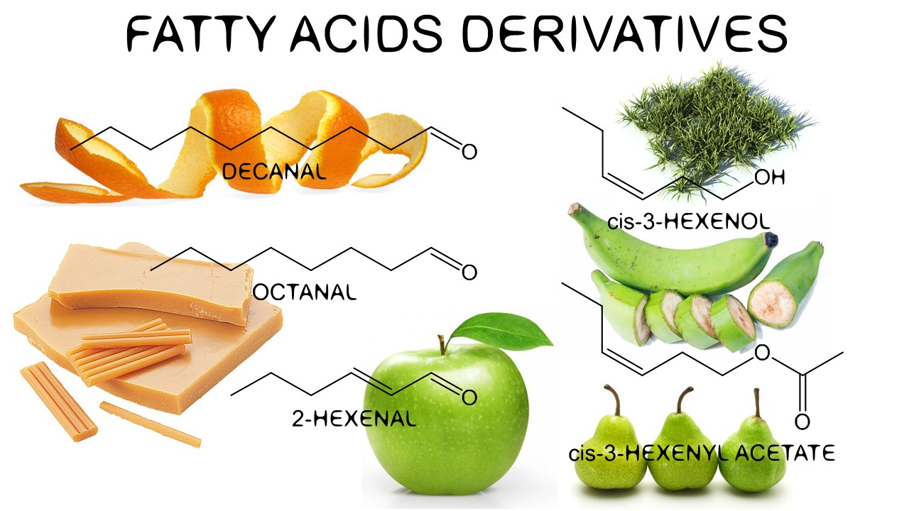 Fat acids derivatives in tulips