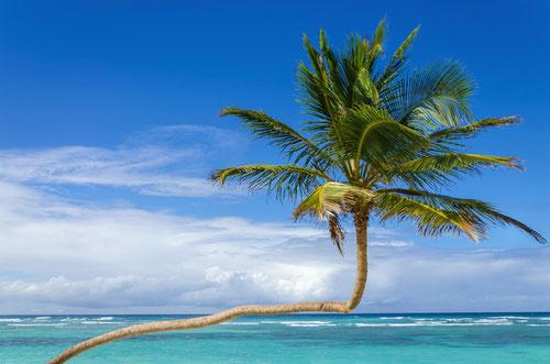 St Barth palmtree