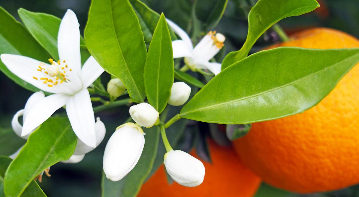 Tom S Of Maine Natural Orange Blossom Shower Gel And