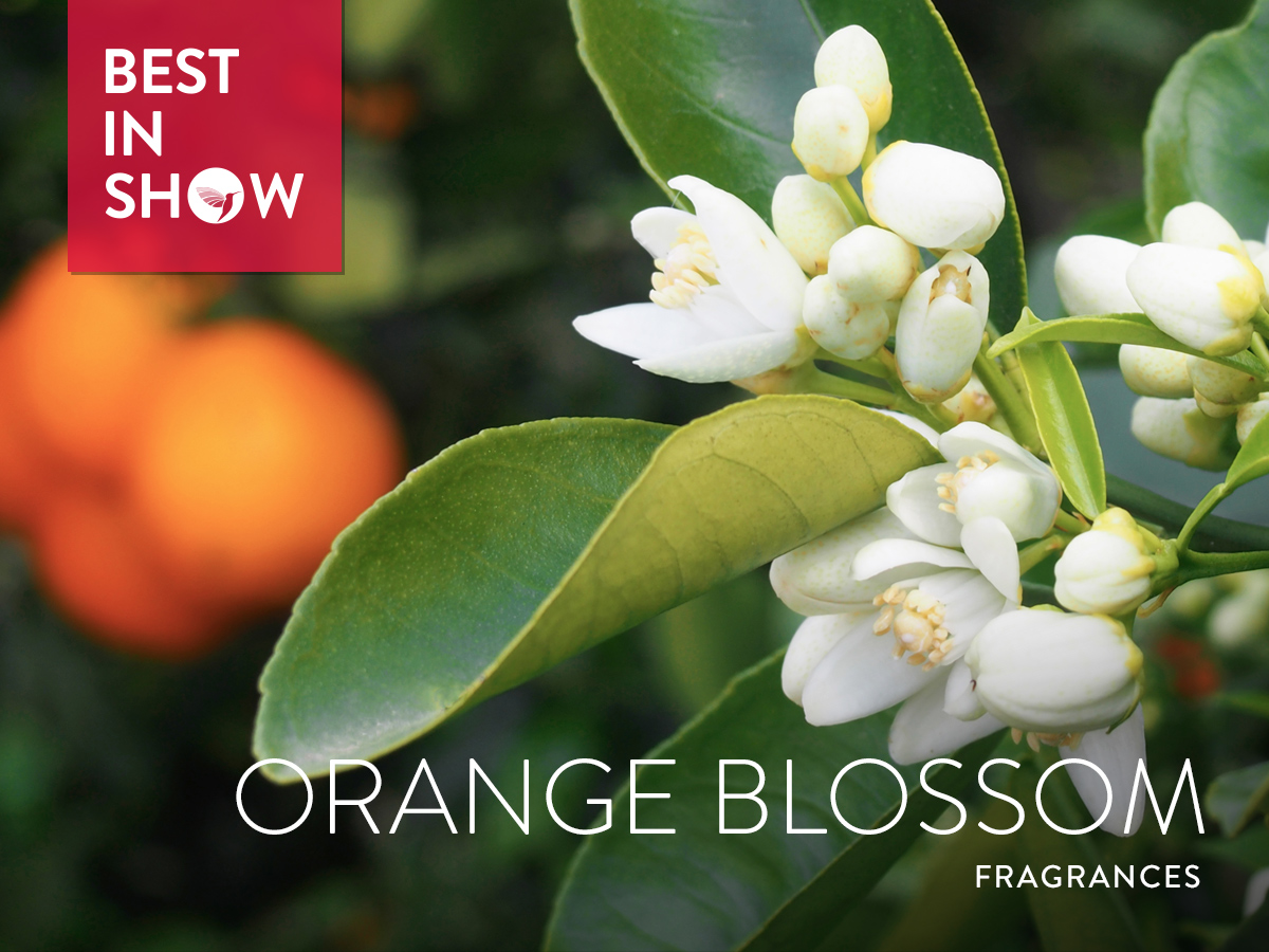 Best In Show Orange Blossom Fragrances 2017 Best In Show