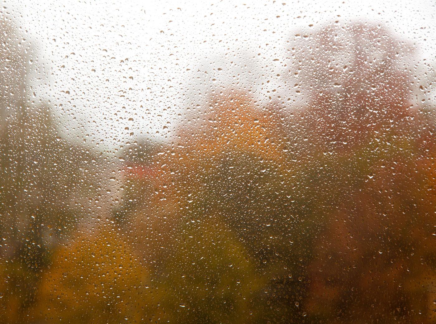 Чем пахнет дождь