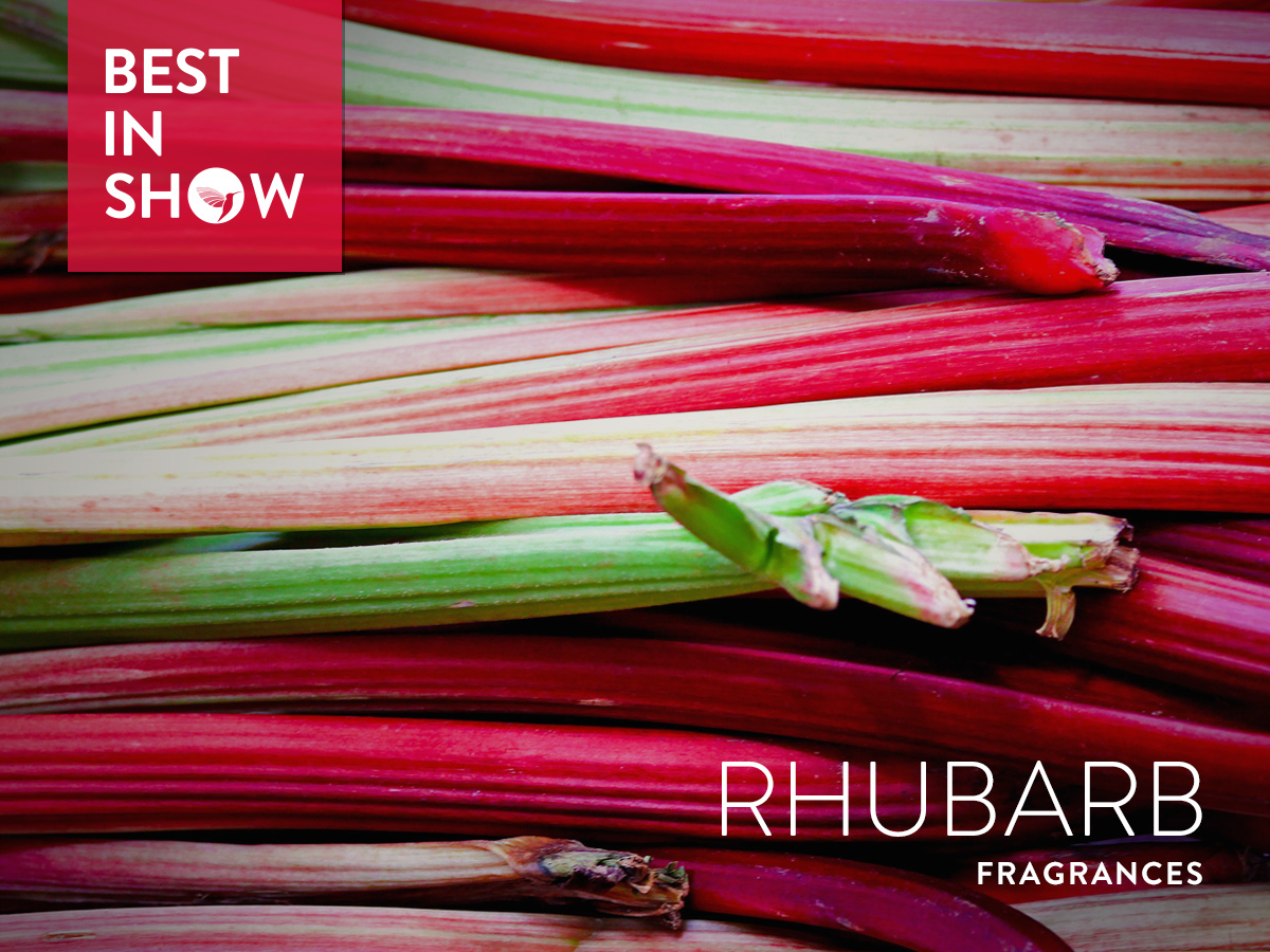 42800683a89 Best in Show  Rhubarb (2017) ~ Best in Show