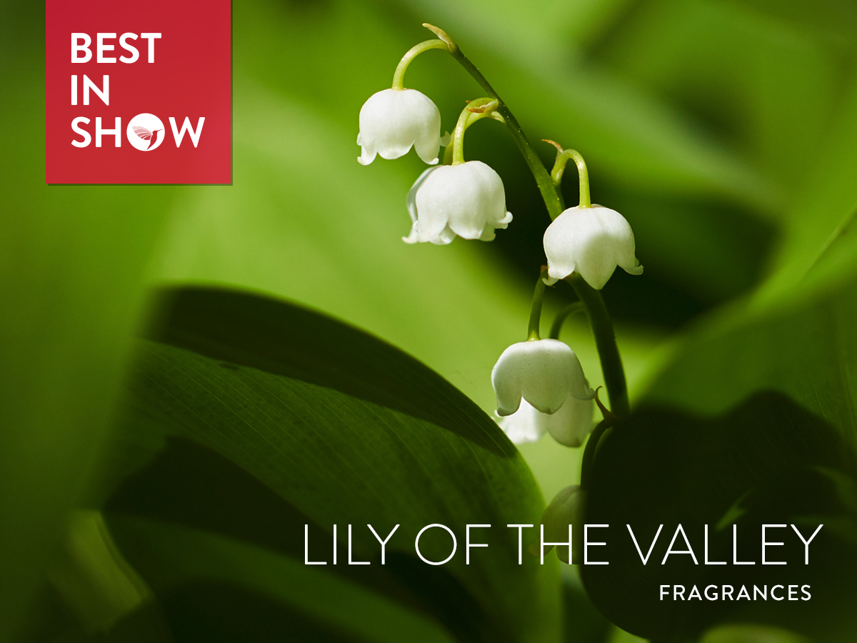 Best In Show Lily Of The Valley 2018 Best In Show