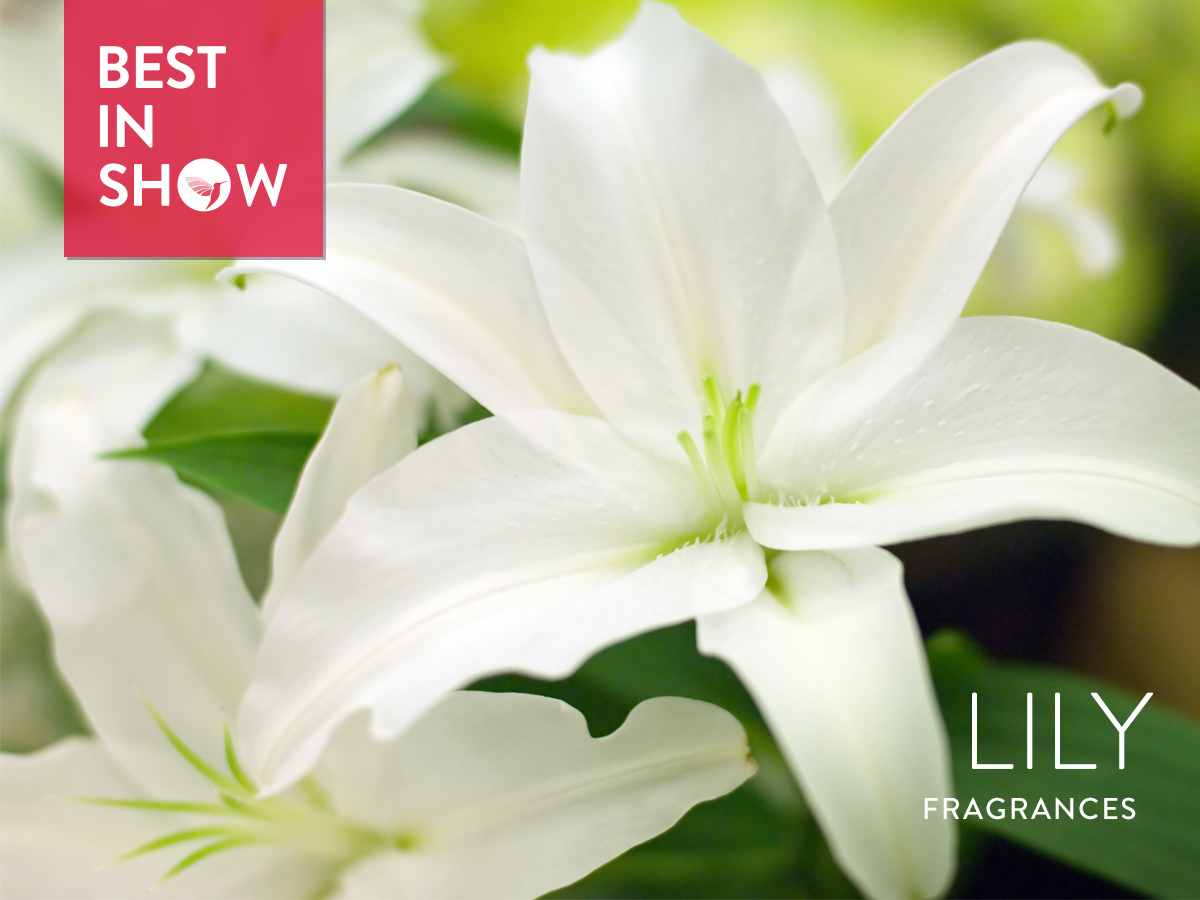 Best in show lily 2018 best in show lily fragrances best in show banner izmirmasajfo