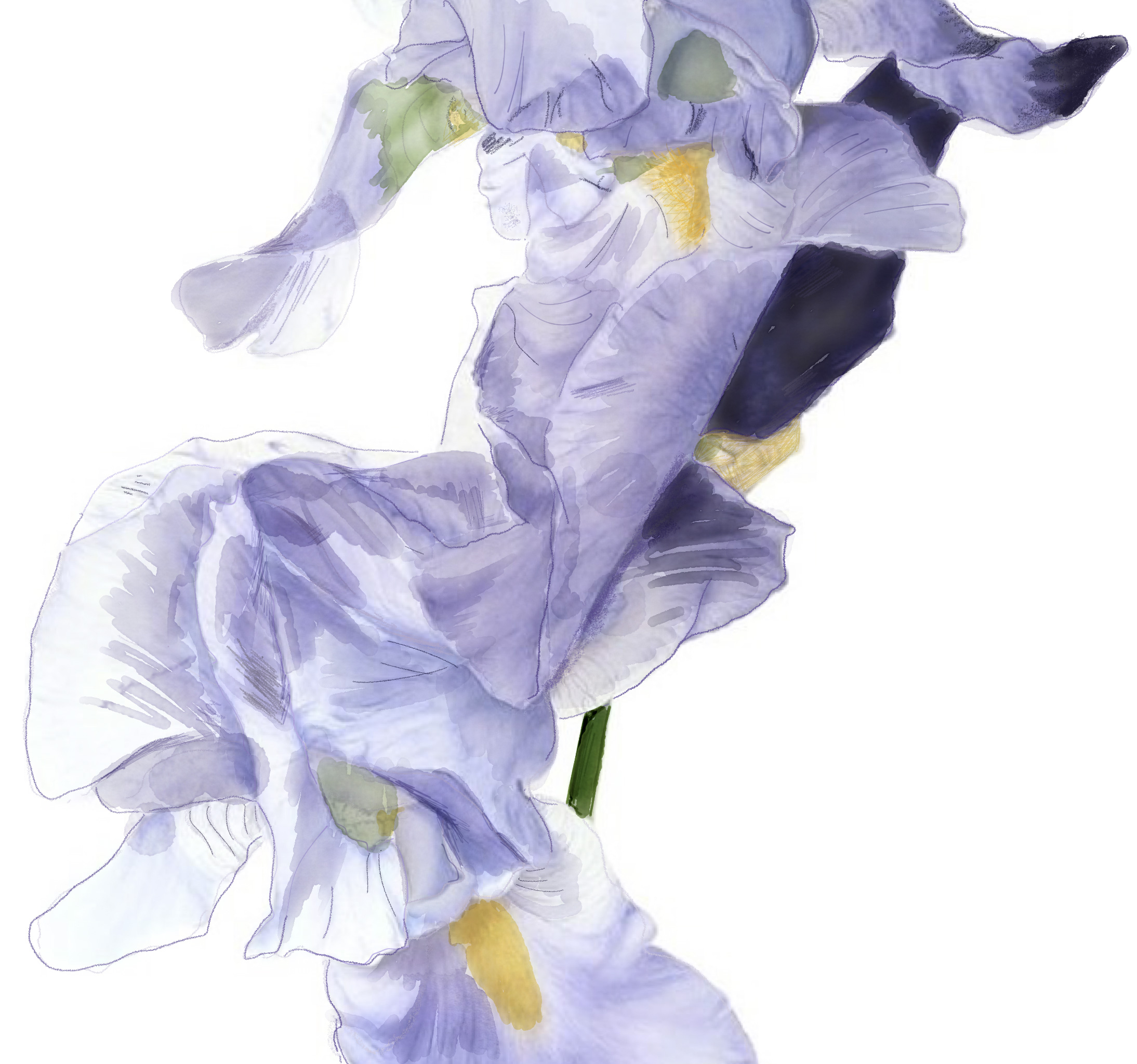 Lets name the new dusita perfume fragrance news pissara also showed us the live iris flower and the watercolor picture she created herself as the visual art interpretation for the perfume izmirmasajfo