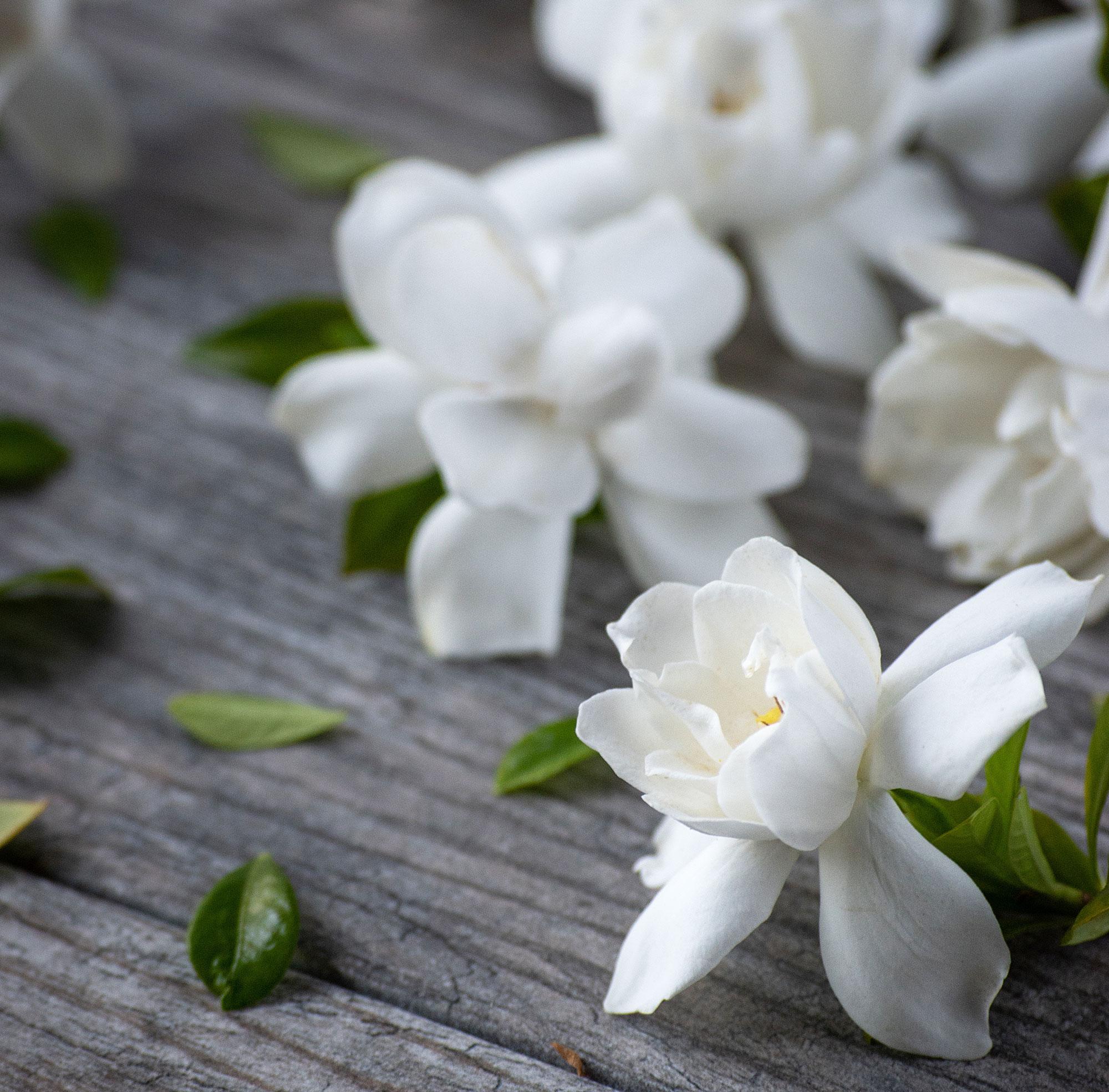 К чему дарят белые цветы