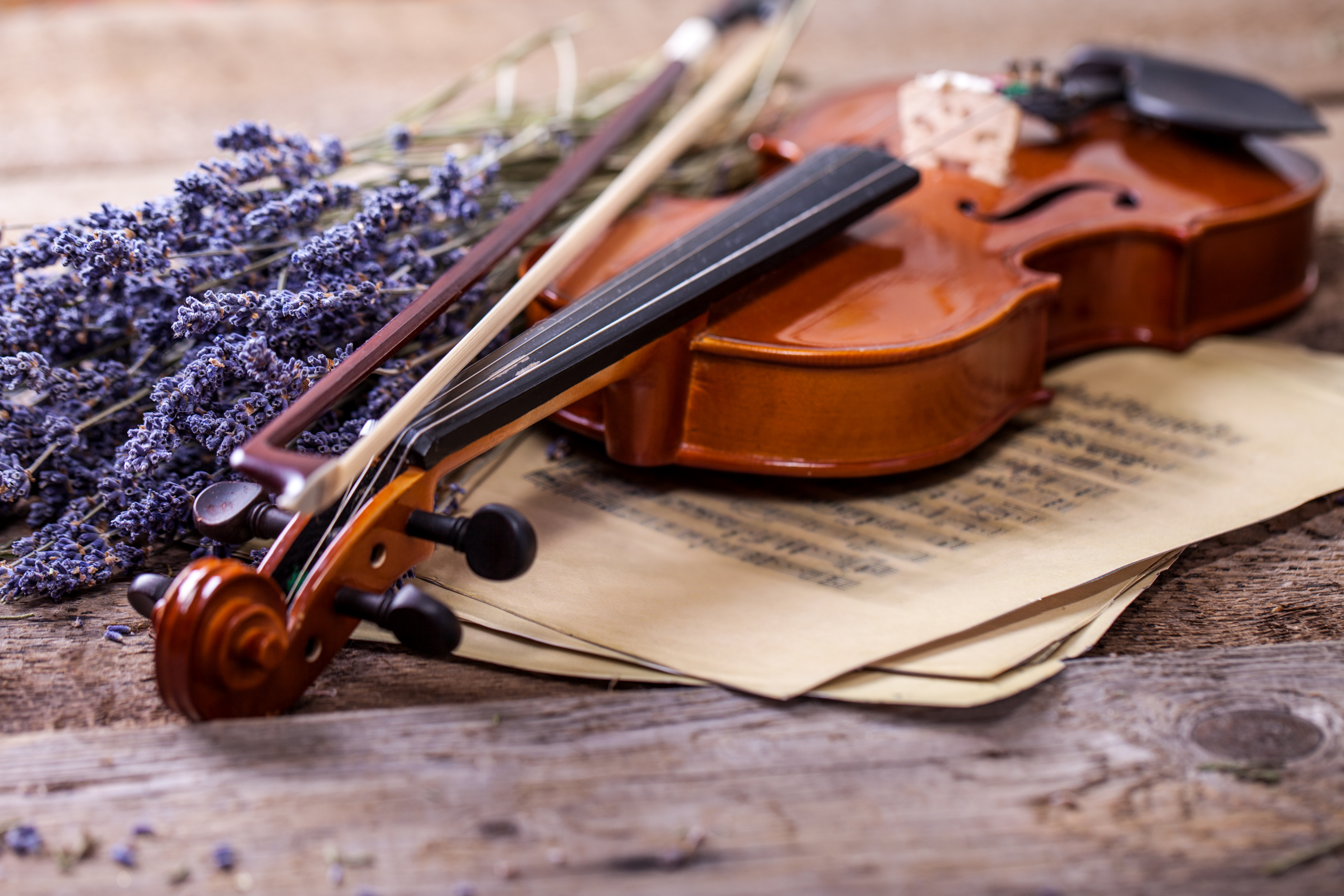 Music For A While Violin and Lavender
