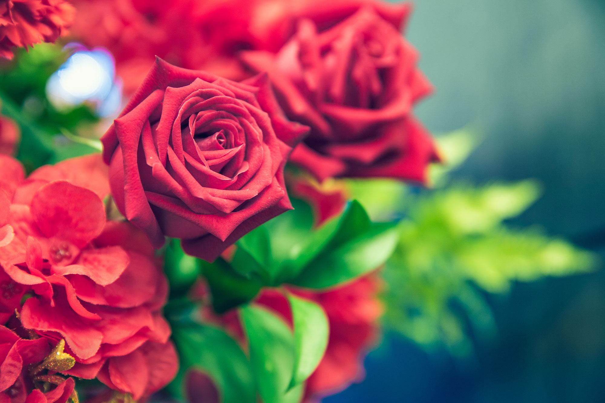 El Mundo De Las Rosas Nain Sukh La Historia De Los Campos De Rosas
