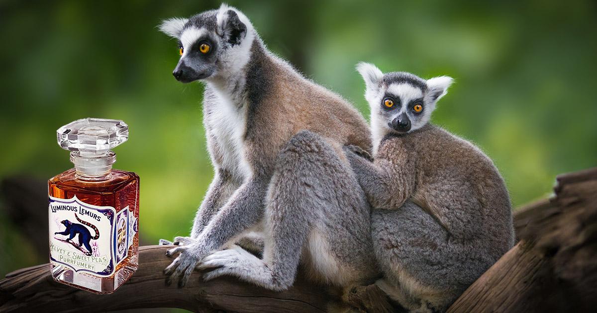 Lemurs and Lucious Lemurs Perfume.