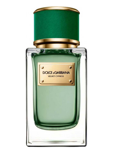 velvet cypress dolce gabbana parfum ein neues parfum f r. Black Bedroom Furniture Sets. Home Design Ideas