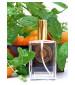 perfume Mandarin & Mint