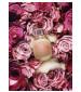 perfume Une Folie de Rose
