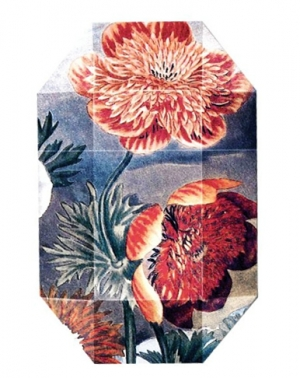Print Collection Stella 03 Stella McCartney for women