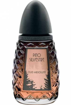 Oud Absolute Pino Silvestre pour homme