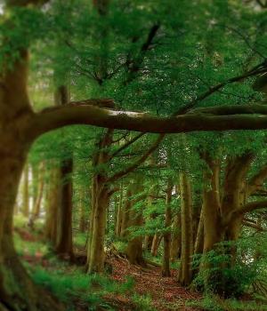 Precious Forest Keiko Mecheri für Frauen und Männer