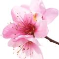 Абрикосовый цвет