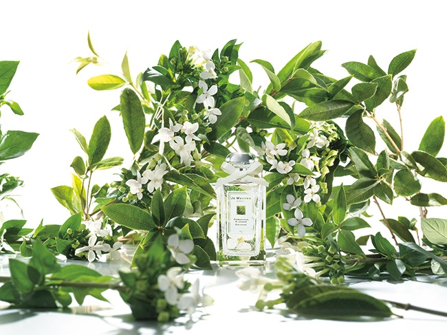 Osmanthus Blossom Jo Malone London Perfume A Fragrance