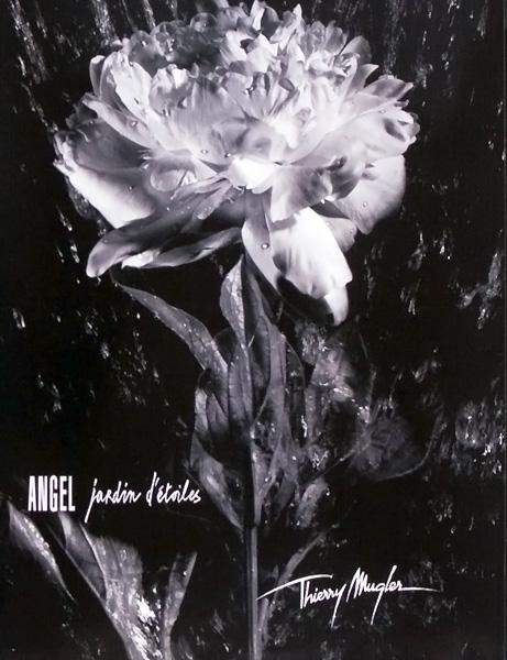Angel garden of stars le lys mugler perfume a for A travers le miroir thierry mugler