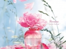 Peony L`Occitane en Provence for women Pictures