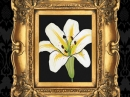 Gilded Lily Ineke for women Pictures