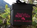 Rose & Vines Rose en Bos de dama Imagini