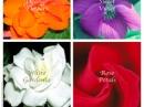 Sweet Violet Monotheme Fine Fragrances Venezia für Frauen Bilder