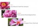 Attimo L`Eau Florale Salvatore Ferragamo für Frauen Bilder