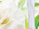 Pur Desir de Gardenia Yves Rocher de dama Imagini